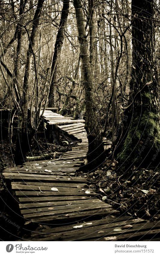 Weg zum Hexenhaus Natur Baum Pflanze Blatt Wald Herbst Holz Wege & Pfade gehen Angst Ast Fußweg gruselig Unwetter Urwald Steg