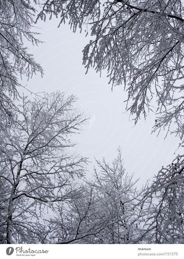 Winterwald II Farbfoto Schwarzweißfoto Außenaufnahme Textfreiraum Mitte Hintergrund neutral Morgen Tag Kontrast Starke Tiefenschärfe Froschperspektive
