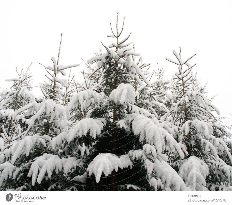 Winterwipfel Außenaufnahme Textfreiraum oben Morgen Tag Kontrast Zentralperspektive Totale Design Sinnesorgane Erholung ruhig Schnee Winterurlaub Feste & Feiern