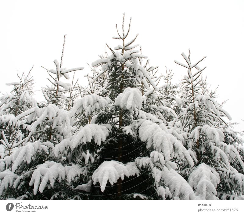 Winterwipfel Natur weiß Baum Erholung Einsamkeit ruhig Landschaft Winter Wald kalt Schnee grau Feste & Feiern hell Stimmung Eis