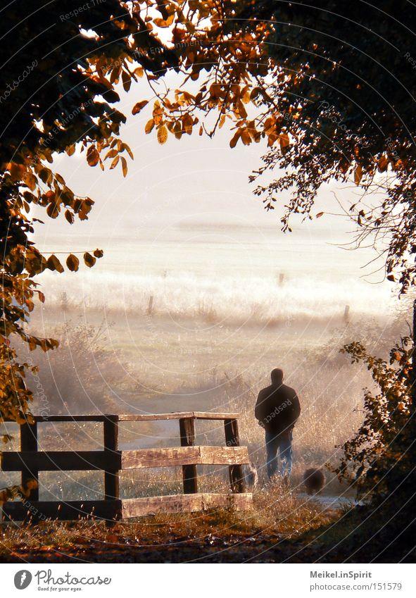 Spaziergang Leben wandern Spazierweg Mann Erwachsene Natur Sonnenaufgang Sonnenuntergang Herbst Schönes Wetter Nebel Blatt Wiese Feld Hund braun gelb Sorge