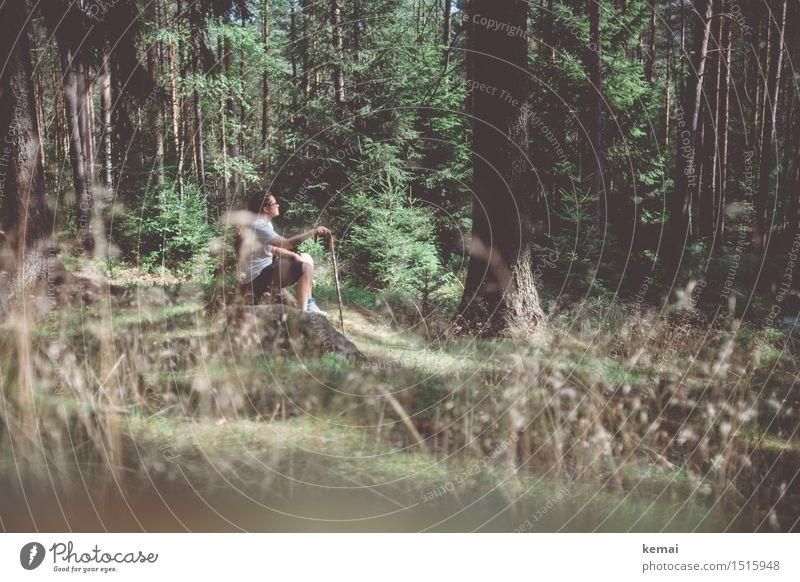 Junge Frau sitze im Wald mit Wanderstock Freizeit & Hobby Ausflug Abenteuer Freiheit wandern Mensch feminin Erwachsene Leben 1 30-45 Jahre Umwelt Natur Sommer