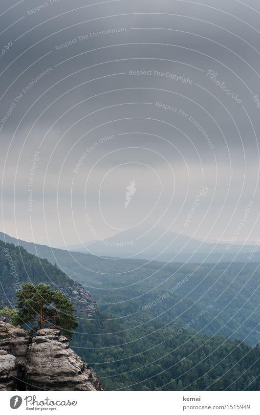 Fels, Baum, Wald, Wipfel, Gipfel Ferien & Urlaub & Reisen Ausflug Abenteuer Ferne Freiheit Umwelt Natur Landschaft Himmel Wolken Sommer schlechtes Wetter Hügel