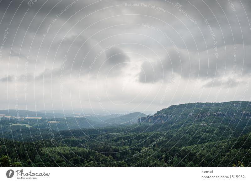 Felsen und Wald Ausflug Abenteuer Ferne Freiheit Umwelt Natur Landschaft Himmel Wolken Sommer schlechtes Wetter Baum Gipfel Sächsische Schweiz