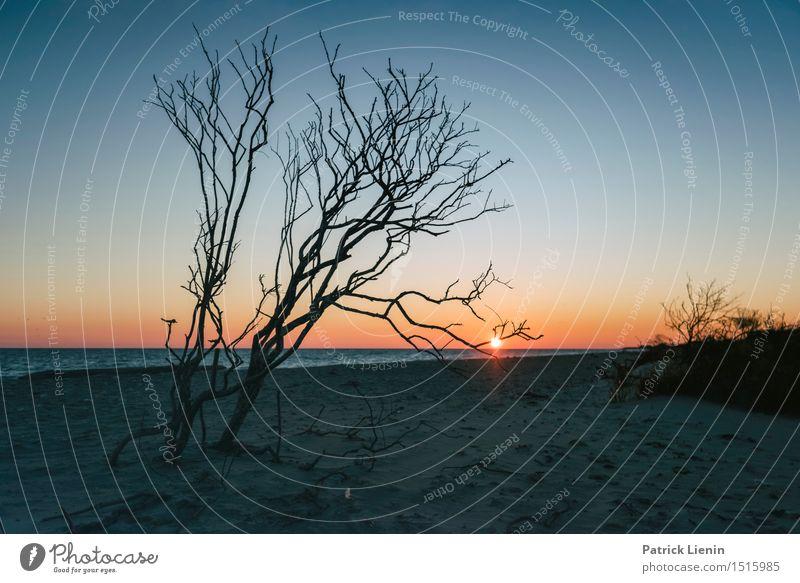 Mondstein-Strand schön harmonisch Wohlgefühl Zufriedenheit Sinnesorgane Ferien & Urlaub & Reisen Abenteuer Freiheit Natur Landschaft Pflanze Himmel