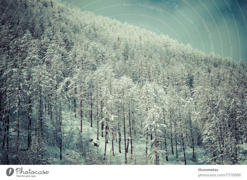 Winterwald Ferien & Urlaub & Reisen Wald Schnee Lifestyle Tourismus wandern ästhetisch Ausflug Abenteuer Winterurlaub