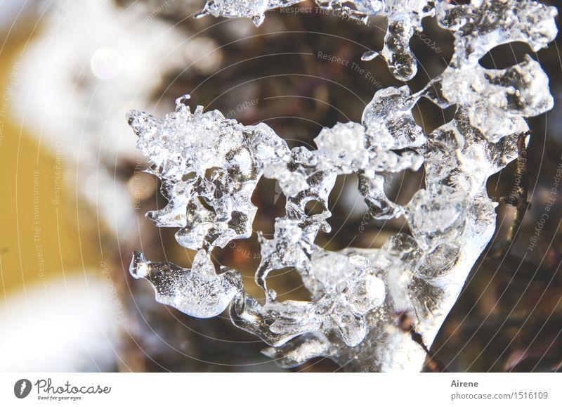 erstarrt Kunstwerk Skulptur Natur Pflanze Urelemente Winter Eis Frost Sträucher Hecke Zweig frieren glänzend fest kalt natürlich braun gold weiß bizarr