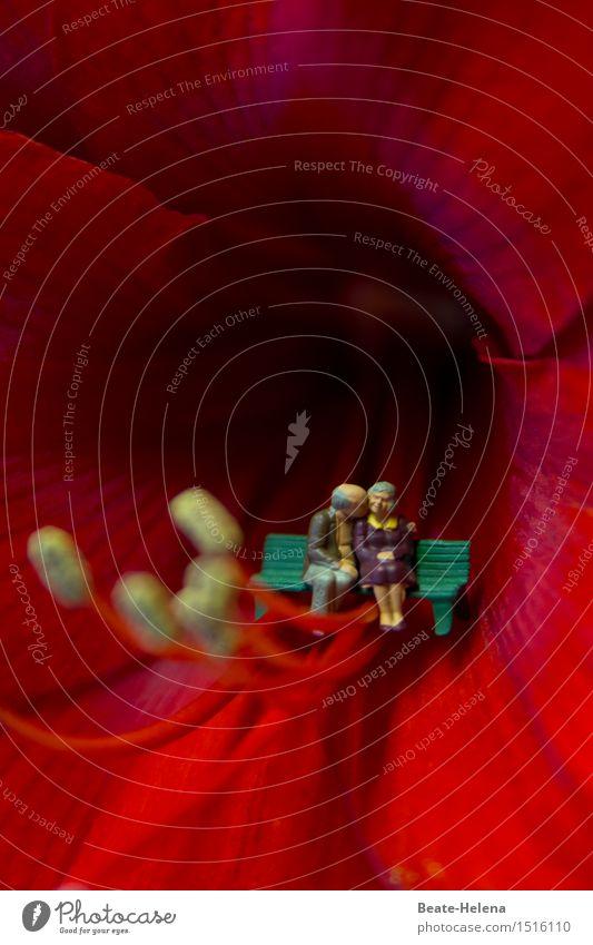 Nächstenliebe| traumhaft schön Garten Weiblicher Senior Frau Männlicher Senior Mann Leben 60 und älter Natur Pflanze Amaryllisgewächse grauhaarig Kommunizieren