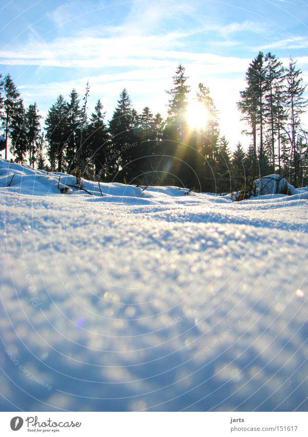 4. Jahreszeit Winter Schnee Wald Tanne Winterwald Himmel Sonne kalt jarts