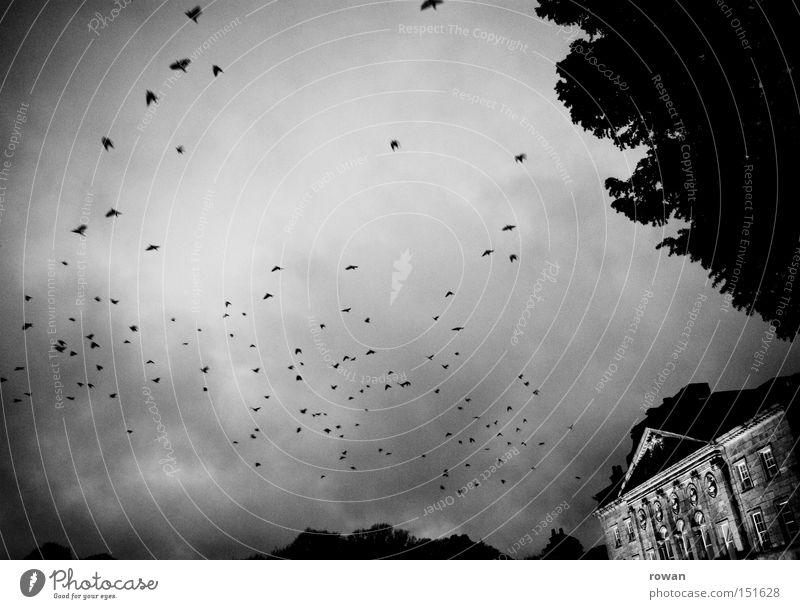 geisterschloss Schwarzweißfoto Hintergrund neutral Vogel außergewöhnlich bedrohlich dunkel gruselig träumen Angst Entsetzen Todesangst gefährlich Rabenvögel
