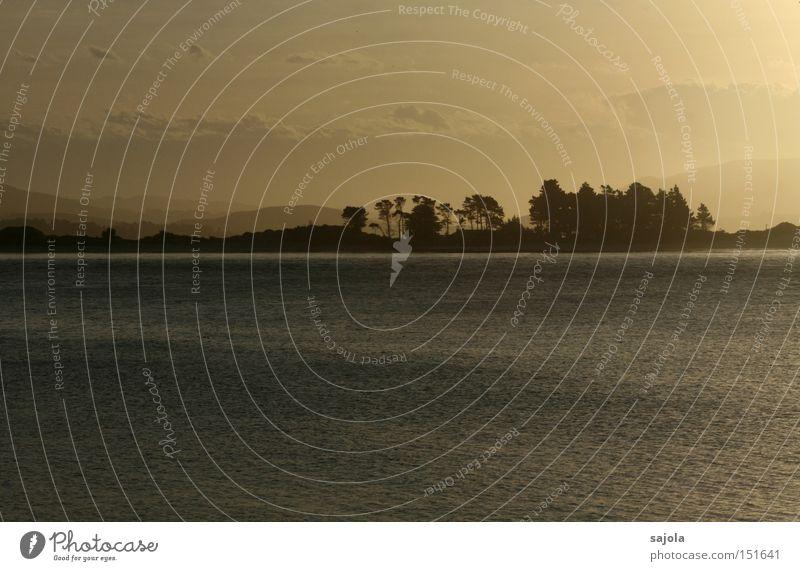 es war ja alles nur ein traum Meer Landschaft Wasser Horizont Nebel Baum Traurigkeit weich Stimmung Frieden Abenddämmerung Sonnenuntergang Neuseeland Dunst