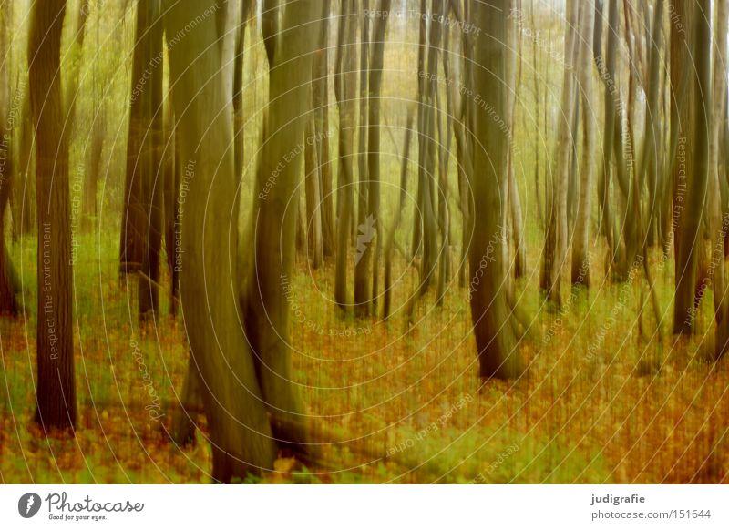 Wald Baum Baumstamm Buche Blatt Natur Umwelt Herbst Laubbaum Bewegung fallen Farbe Dynamik