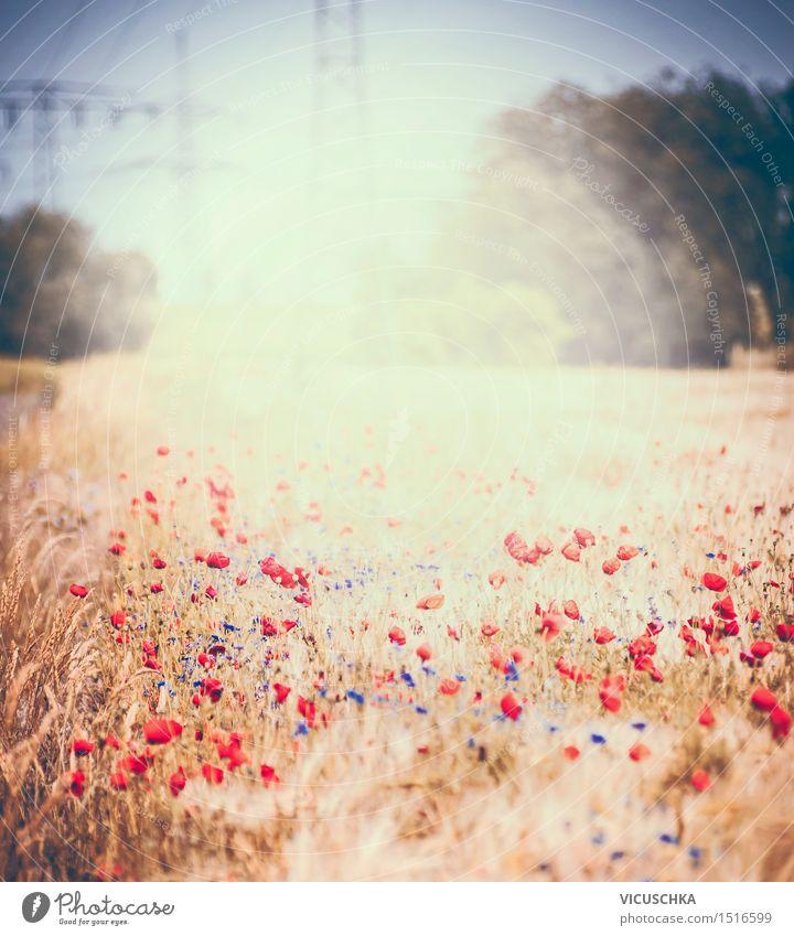 Sommerfeld mit Mohnblumen Lifestyle Design Umwelt Natur Pflanze Sonnenlicht Schönes Wetter Blume Gras Sträucher Blatt Blüte Park Wiese Feld Blühend retro