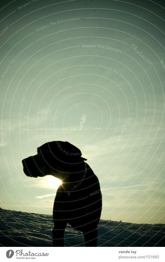 Schattenhund Hund Tier Schnee Gegenlicht Sonne Licht Ferne Freiheit Winter Berge u. Gebirge Beleuchtung paul deutsch kurzhaar