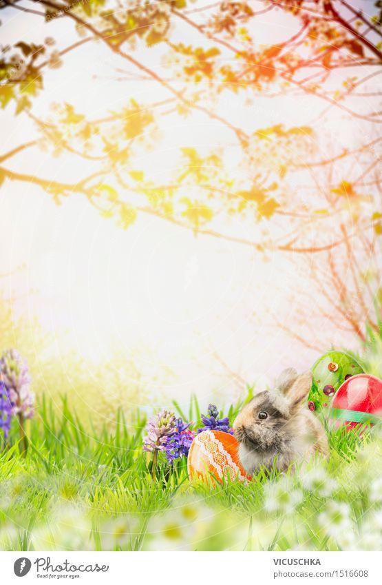 Osterhase mit Frühlingsblumen und Ostereier in Frühlingsgarten Natur Blume Landschaft Tier Gras Stil Hintergrundbild Garten Feste & Feiern springen Design Park