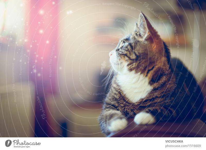 Kätzchen Träume Katze Natur ruhig Tier Haus Lifestyle Stimmung Wohnung Zufriedenheit Häusliches Leben Sofa Haustier gemütlich Tierliebe