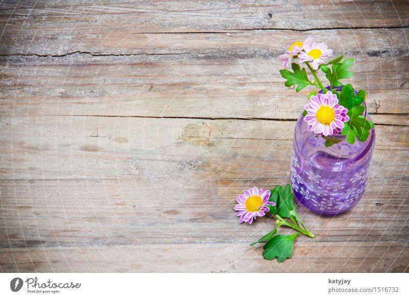 Blumen in Vase Muttertag Valentinstag Holz Tisch Holztisch Margerite Gänseblümchen rosa Romantik Geschenk Gutschein schenken Liebe Hintergrundbild violett