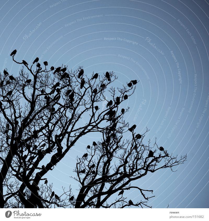 vogelversammlung Baum Geäst Vogel Rabenvögel Vogelschwarm dunkel gruselig Silhouette Verabredung Zusammensein begegnen Versammlung spukhaft
