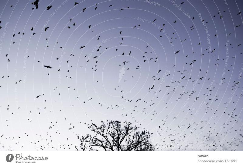 vogelschwarm Baum Vogel fliegen Luftverkehr gruselig Surrealismus falsch Geäst Schwarm Rabenvögel Plage Vogelschwarm