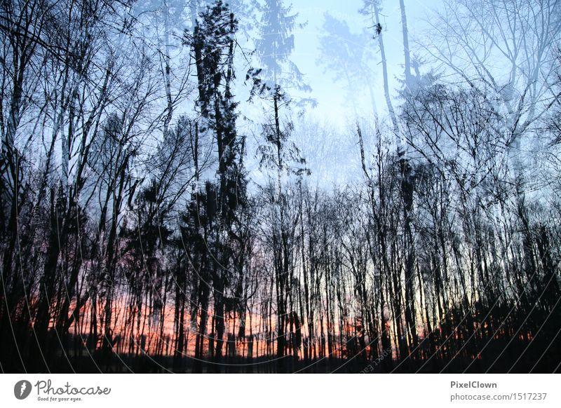 Sonnenuntergang im Wald Natur Ferien & Urlaub & Reisen Pflanze schön Baum Erholung Blatt ruhig Umwelt Gefühle Holz Stimmung träumen Tourismus Wachstum