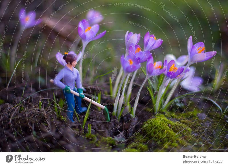 wachsen und gedeihen | bei guter Pflege sichergestellt Stil Dekoration & Verzierung Landwirtschaft Forstwirtschaft Erfolg feminin Natur Pflanze Erde Frühling
