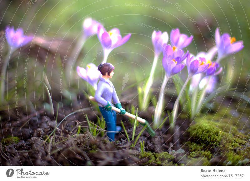 Die Krokusse strahlen bereits Natur Pflanze grün Erholung Frühling Wege & Pfade Garten außergewöhnlich Arbeit & Erwerbstätigkeit Freizeit & Hobby leuchten