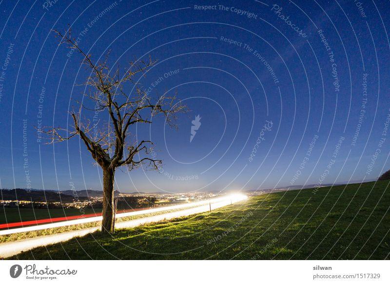 Lichtspur-Baum in der Nacht Himmel Natur blau grün schön weiß Landschaft Herbst Senior Wiese Gras Horizont PKW leuchten ästhetisch