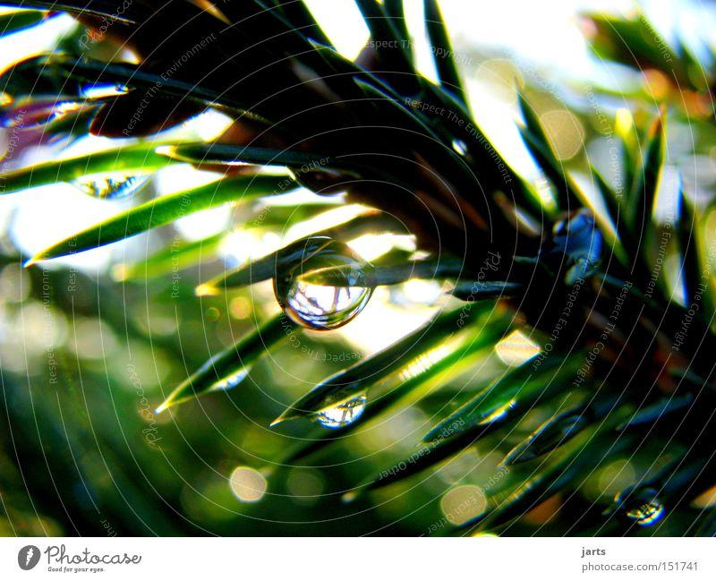 ...nicht nur zur Sommerzeit.... Farbfoto Außenaufnahme Nahaufnahme Detailaufnahme Menschenleer Tag Licht Sonnenlicht Schwache Tiefenschärfe Zentralperspektive