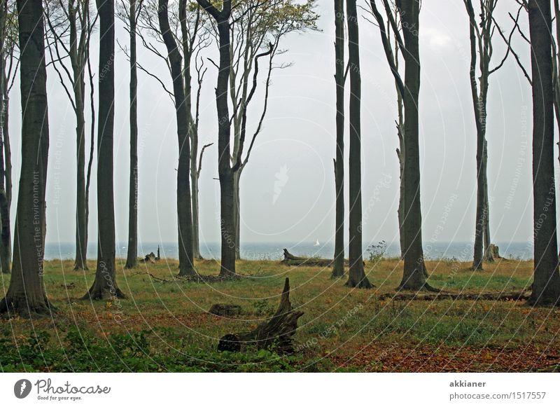 """Buchenwald Umwelt Natur Landschaft Pflanze Erde Herbst Baum Nutzpflanze Wald Ostsee """"Baum Bäume Stamm Stämme Baumstamm Baumstämme Wald Wälder Wäldchen forest"""