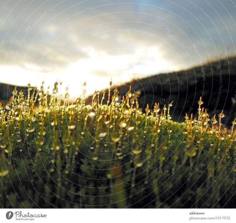 Tropfnass Umwelt Natur Pflanze Urelemente Wasser Wassertropfen Frühling Gras Moos Wildpflanze Garten Park Wiese frisch hell nah natürlich grün Farbfoto