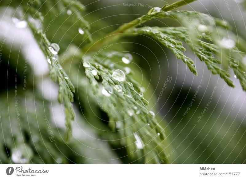 Eisig Wasser grün Winter Park Wetter Wassertropfen Tropfen fest Flüssigkeit Tauwetter