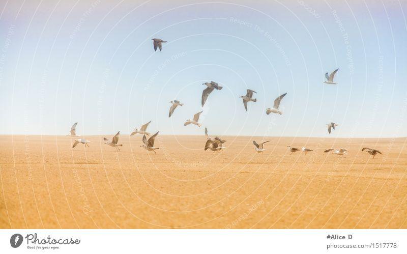 Möwen auf Sand Fliegen davon Umwelt Natur Landschaft Himmel Hügel Küste Strand Tier Wildtier Vogel Schwan Tiergruppe Schwarm außergewöhnlich blau braun gelb