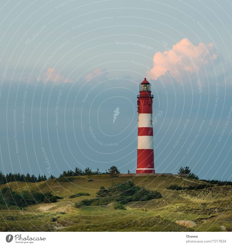 Amrum / Leuchtturm Himmel Natur Ferien & Urlaub & Reisen Pflanze blau Sommer grün Landschaft Wolken Umwelt Sommerurlaub Stranddüne Nordsee Heidekrautgewächse