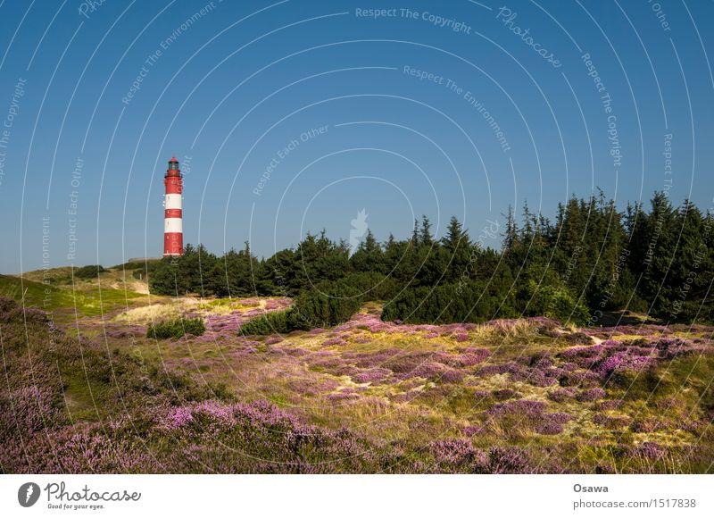 Amrum / Leuchtturm Insel Nordsee Nordseeinsel Düne Stranddüne Heide Baum Textfreiraum oben Himmel Wolkenloser Himmel blau Sonne Sommer Ferien & Urlaub & Reisen