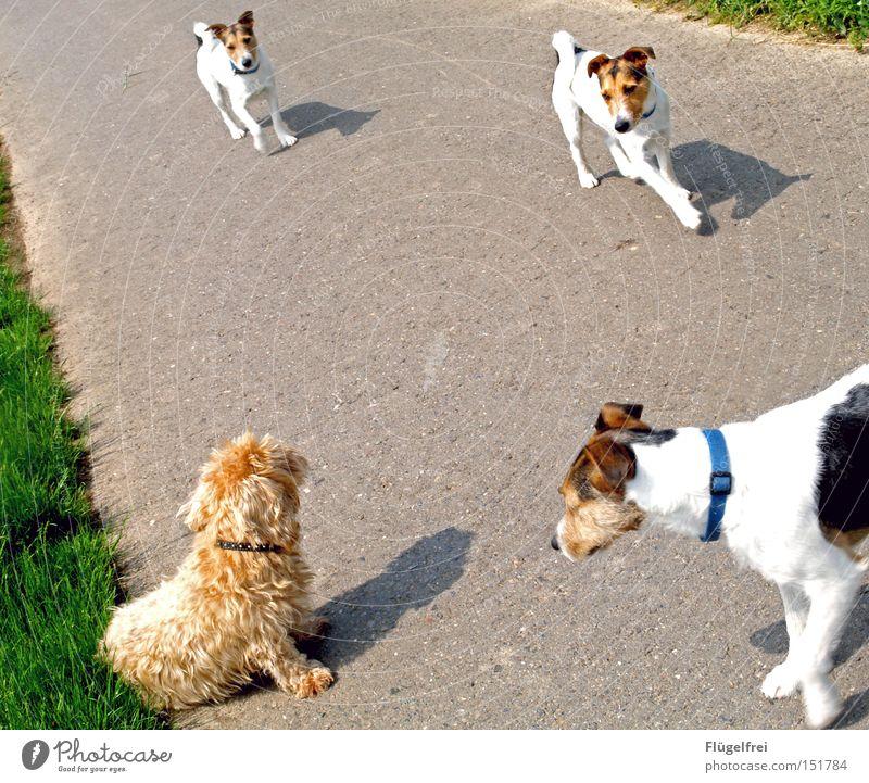 Annäherungsversuche Hund Sommer Tier Wege & Pfade sitzen laufen Kommunizieren süß Spaziergang Neugier Wiederholung Geruch Säugetier Flirten Bildbearbeitung