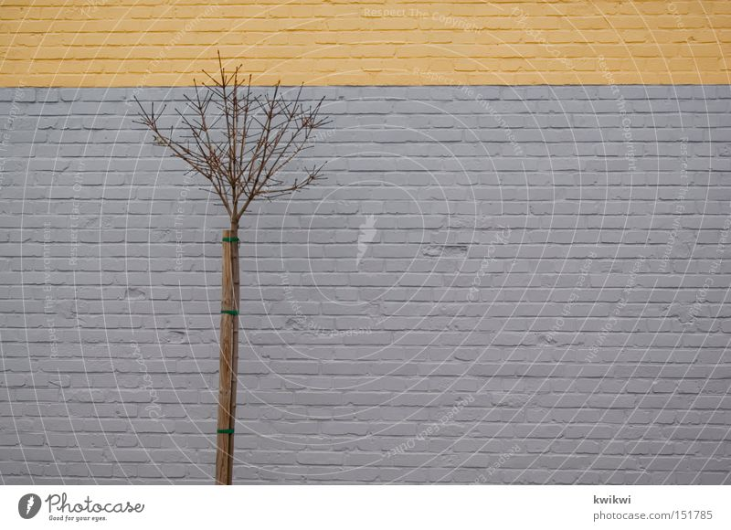 baum vor wand Baum Winter gelb Herbst Wand grau Stein Mauer Sträucher Ast Backstein Zweig