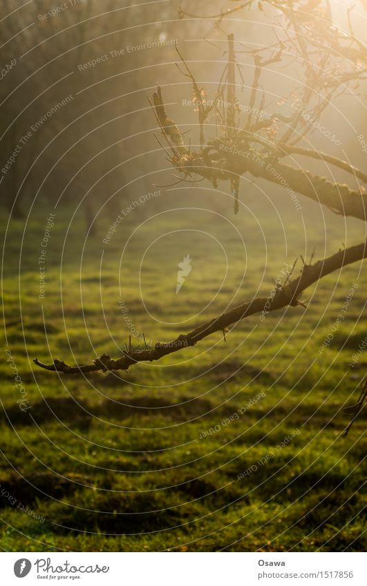 Gegenlicht Natur Wald Waldlichtung Wiese Weide Baum Ast Zweig Herbst Tag Farbfoto Gedeckte Farben Schwache Tiefenschärfe grün