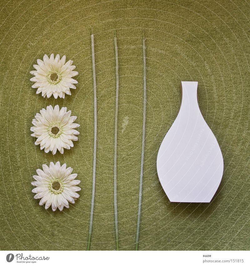 Blumenkunst Lifestyle Stil Design Dekoration & Verzierung Muttertag Holz einfach trocken grün weiß Kunst Ordnung Teppich Vase Bodenbelag Composing Gerbera Blüte
