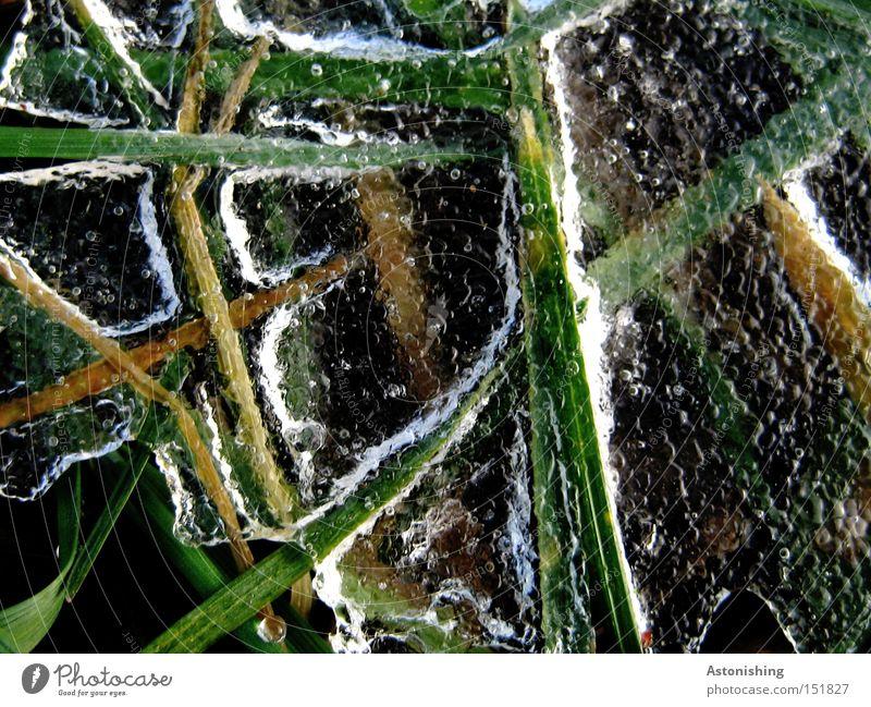 die Wiese im Gefrierschrank Wasser weiß grün Winter kalt Gras Eis Frost gefroren Halm durchsichtig Eisschicht