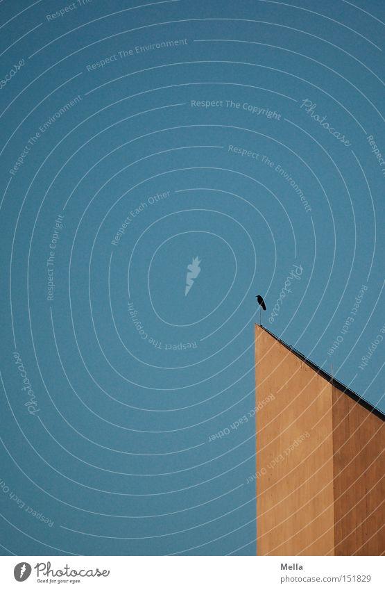 aufgesetzt Turm Kirchturm Krähe Rabenvögel Aaskrähe sitzen oben hoch Himmel blau grau Beton Luft Schweben Vogel Detailaufnahme