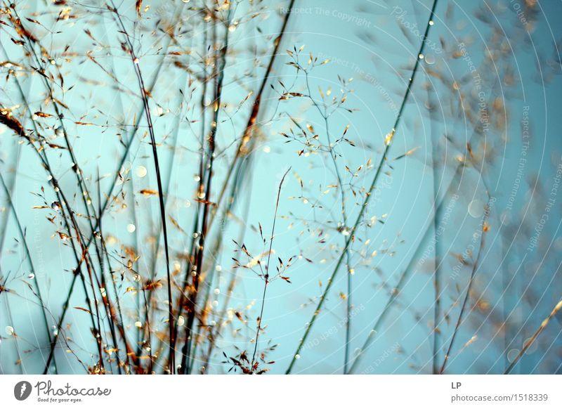 Schattenbilder von wilden Blumen und von Gras Umwelt Natur Frühling Sommer Herbst Schönes Wetter Regen Pflanze Wildpflanze Garten Park Wiese Feld Wald Wärme