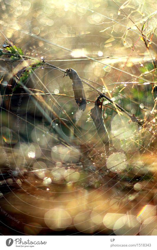 Tautropfen Natur Pflanze Sommer Erholung Freude Umwelt Wärme Herbst Frühling Wiese Gras feminin Garten träumen Park wild
