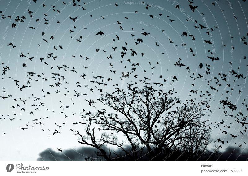 vogelschwarm II Baum Vogel fliegen Luftverkehr gruselig Surrealismus falsch Geäst Rabenvögel Plage Vogelschwarm