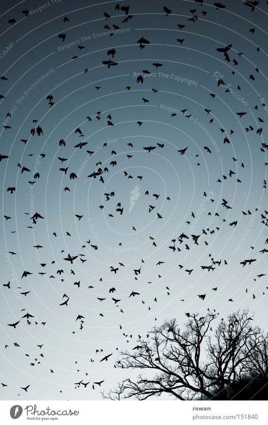 vogelschwarm III Baum Vogel fliegen Luftverkehr gruselig Surrealismus falsch Geäst Rabenvögel Plage Schwarm Vogelschwarm