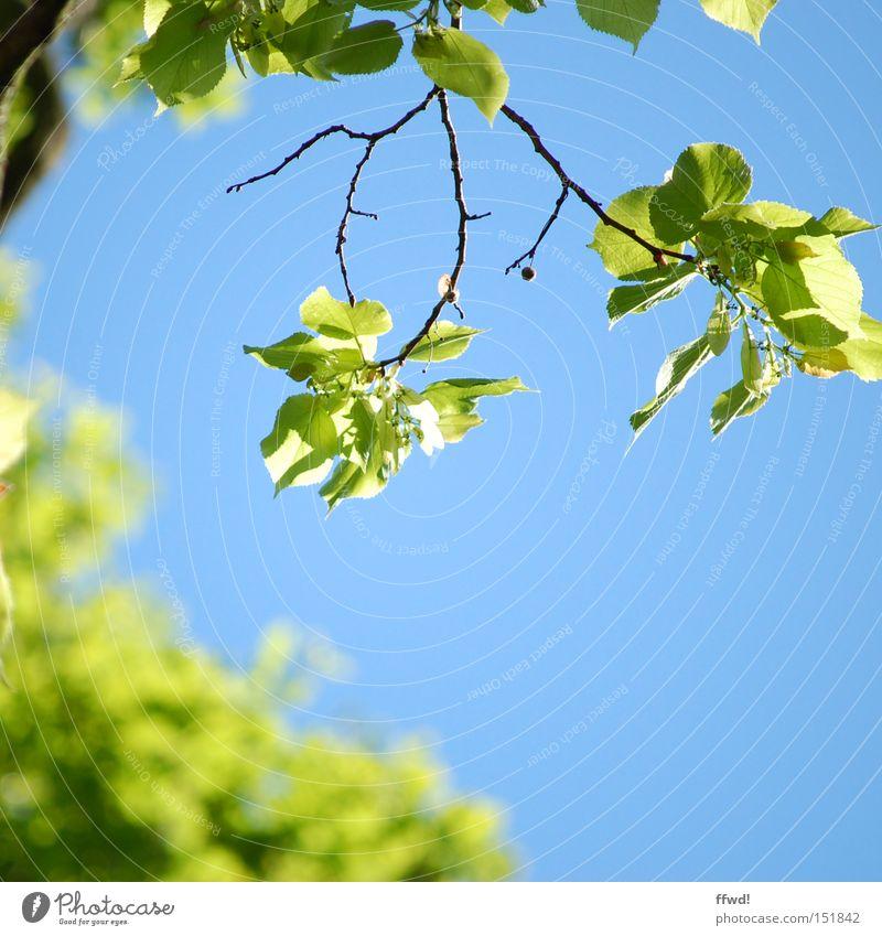 bald ! Farbfoto Außenaufnahme Tag Schwache Tiefenschärfe Leben Umwelt Natur Pflanze Himmel Frühling Klima Schönes Wetter Blatt Park atmen Blühend Erholung