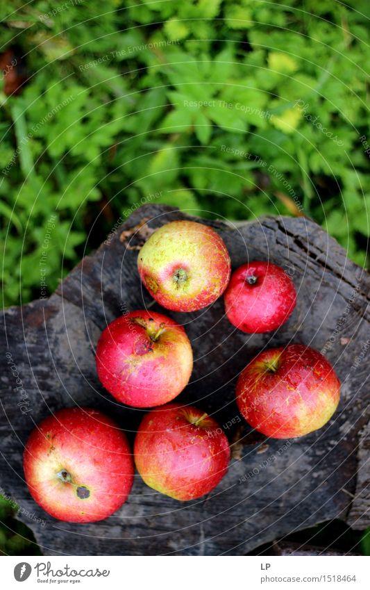 Äpfel auf einem Baumstamm Natur Ferien & Urlaub & Reisen Freude Leben Gefühle Gras Gesundheit Lifestyle Garten Lebensmittel Frucht Freizeit & Hobby frisch