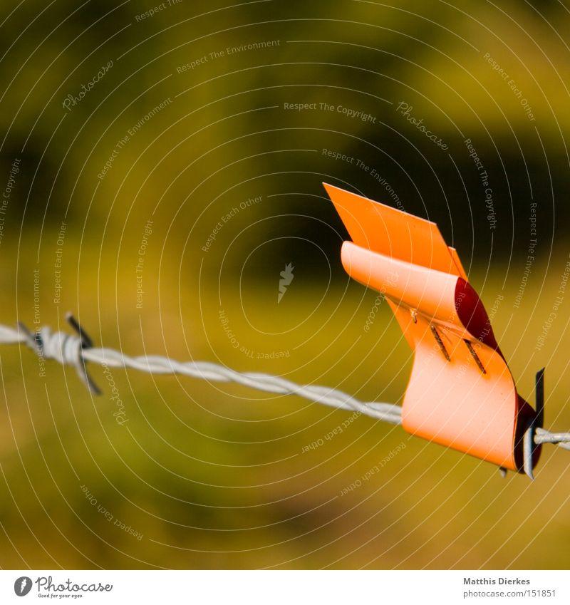 Markierung Zaun Stacheldraht Schilder & Markierungen Natur Landwirtschaft Fahne obskur Weide orange Warnhinweis Signal