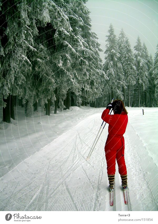 Ein Männlein steht im Walde.. Baum rot Freude Winter Sport Wald Schnee Spielen fahren Skier Tanne Stock Skifahren Wintersport Freizeit & Hobby Arbeitsanzug
