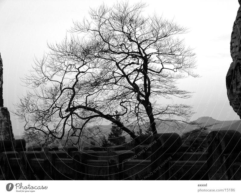 Herbstbaum Baum Winter Abend