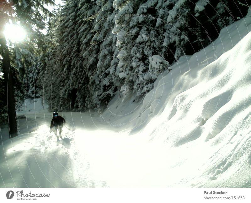 winterzauber Sonne Winter Schnee Sport Wintersport Skifahren Baum Wald Wege & Pfade Schwung Skihose Berg Planai Neuschnee Wintersonne Österreich hochwurzen